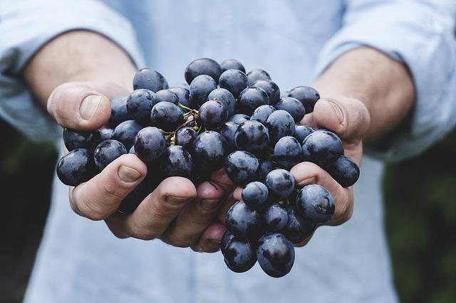 maigrir avec la cure de raisin
